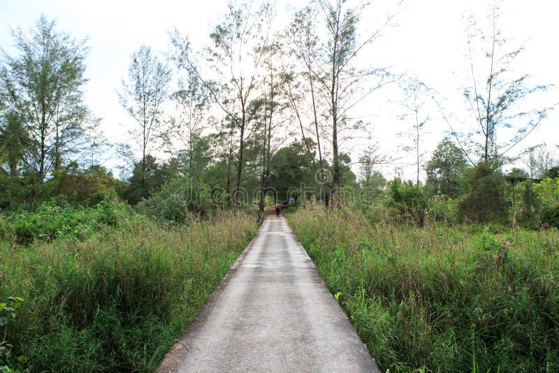 Διάβαση πεζών γεφυρών τσιμέντου κατά μήκος της χλόης στοκ εικόνα