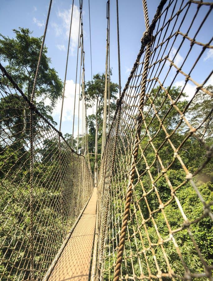 Διάβαση πεζών θόλων στο εθνικό πάρκο Kakum, Γκάνα, Δυτική Αφρική στοκ εικόνα με δικαίωμα ελεύθερης χρήσης
