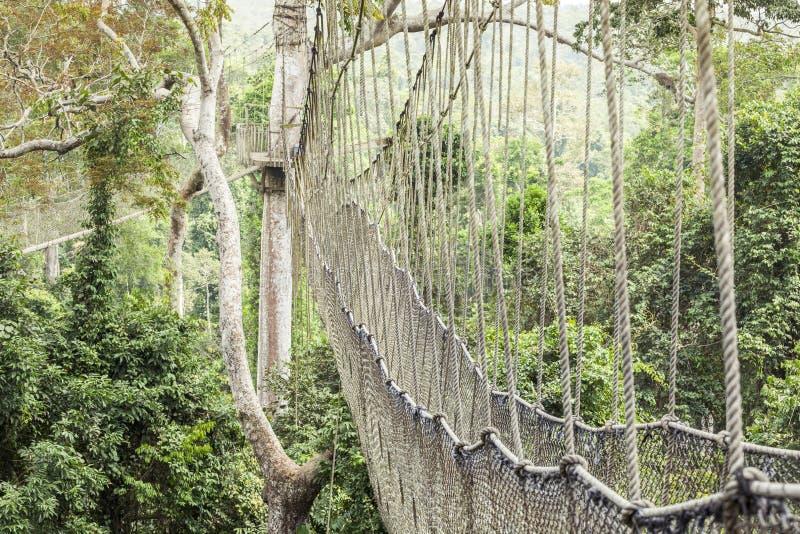 Διάβαση πεζών θόλων στο εθνικό πάρκο Kakum, Γκάνα στοκ εικόνες