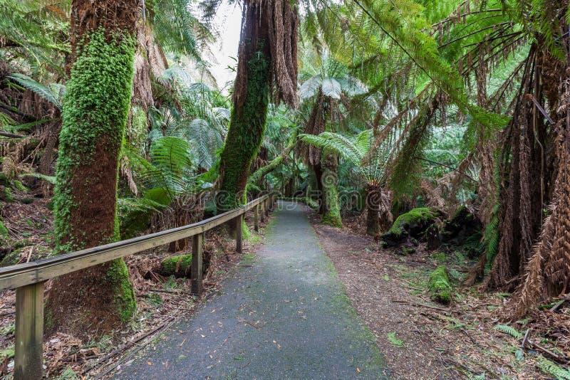 Διάβαση πεζών μεταξύ των φτερών στο τροπικό δάσος προς τις πτώσεις του Russell, Τασμανία στοκ φωτογραφία