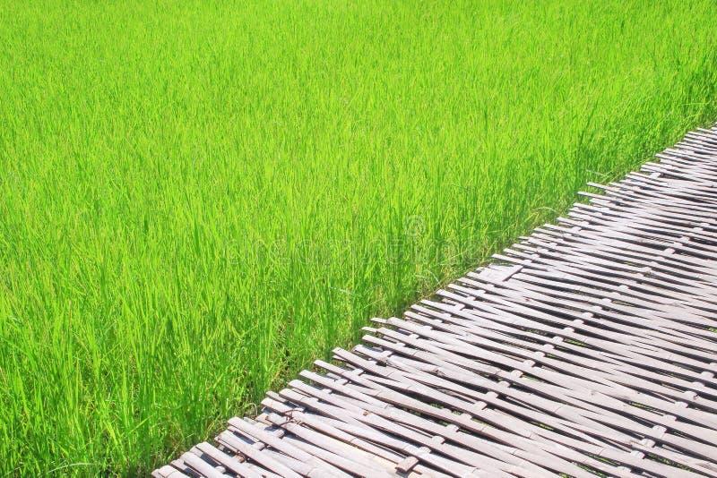 Διάβαση πεζών μπαμπού και μεγάλος τομέας ρυζιού, υπόβαθρο φύσης στοκ φωτογραφίες