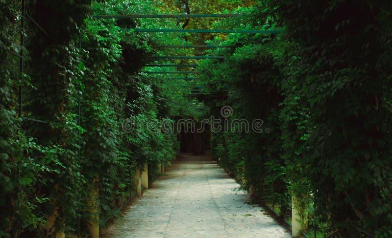 Διάβαση πεζών σηράγγων περγκολών κήπων στο πάρκο στοκ φωτογραφία με δικαίωμα ελεύθερης χρήσης