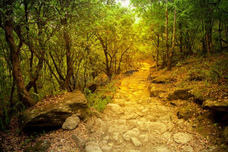 Διάβαση στο δάσος φθινοπώρου στοκ εικόνα
