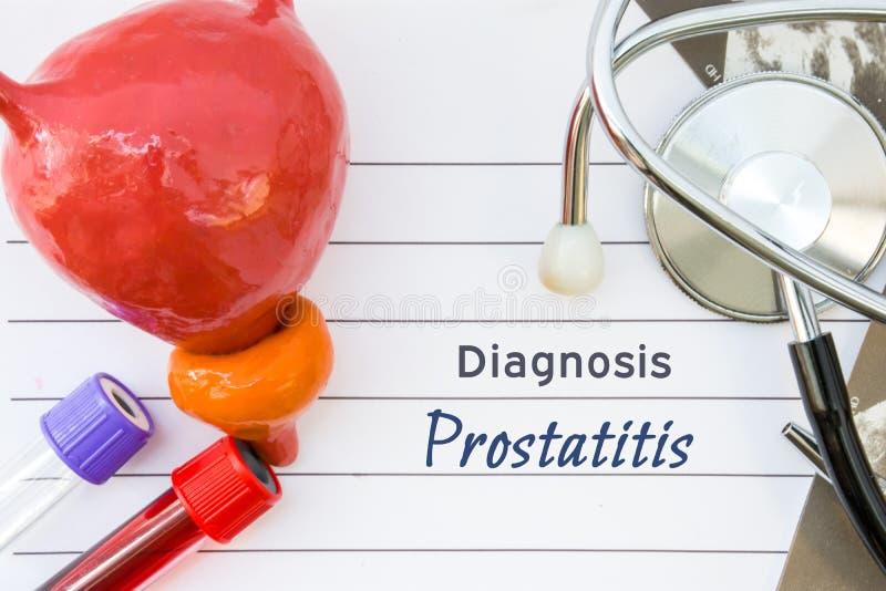 Διάγνωση Prostatitis Ιατρική εικόνα έννοιας προστατικό Prostatitis ασθενειών με το ανατομικό πρότυπο της κύστης με τον προστάτη, στοκ φωτογραφίες