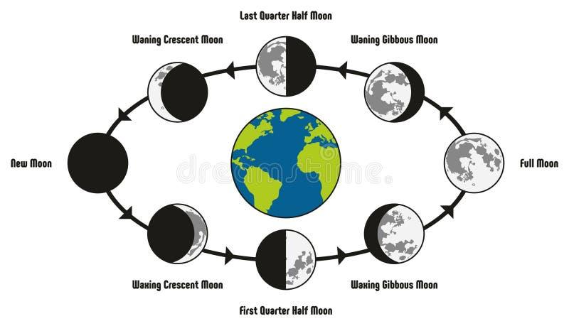 Διάγραμμα κύκλων ζωής φεγγαριών διανυσματική απεικόνιση