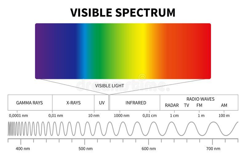 Διάγραμμα ορατού φωτός Ηλεκτρομαγνητικό φάσμα χρώματος, ελαφριά συχνότητα κυμάτων Εκπαιδευτικό διάνυσμα σχολικής φυσικής διανυσματική απεικόνιση