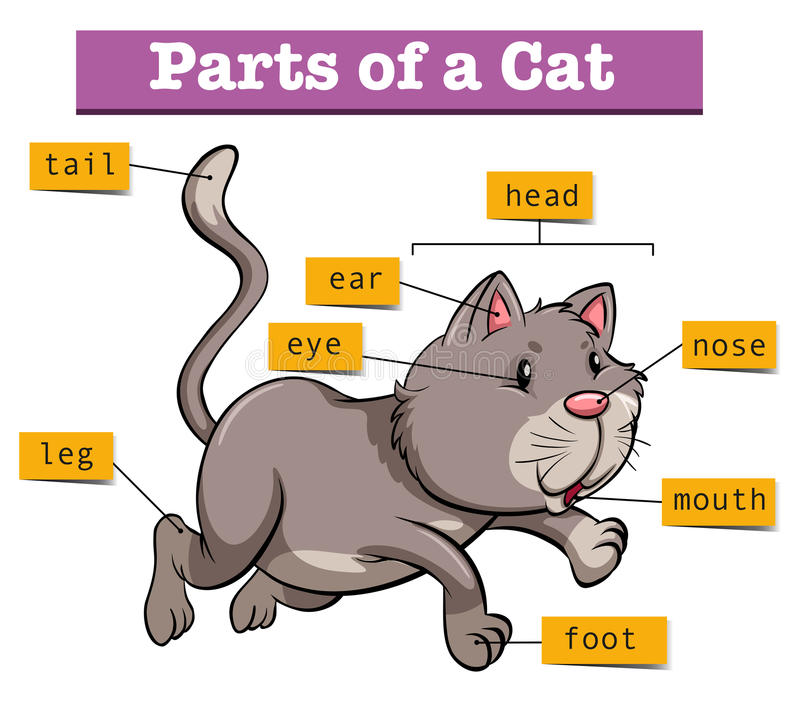 Διάγραμμα που παρουσιάζει μέρη της γάτας ελεύθερη απεικόνιση δικαιώματος