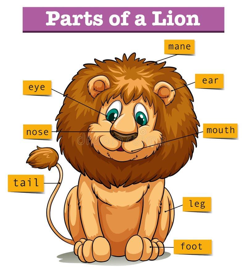 Διάγραμμα που παρουσιάζει μέρη του λιονταριού διανυσματική απεικόνιση