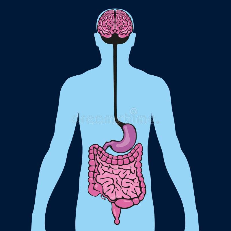 Διάγραμμα που παρουσιάζει τη σύνδεση μεταξύ του εντέρου και του εγκεφάλου μέσω του στομαχιού διανυσματική απεικόνιση