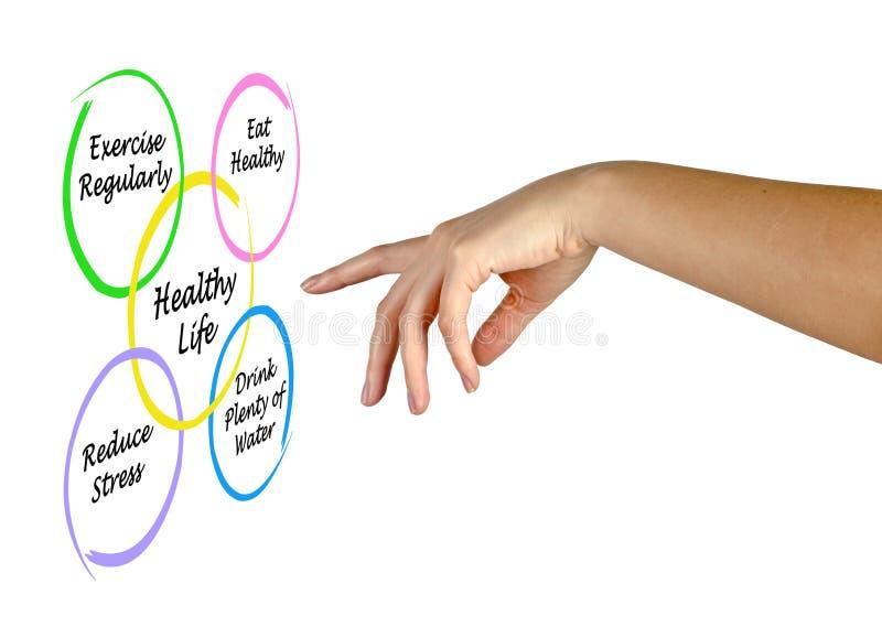 Διάγραμμα της υγιούς ζωής ελεύθερη απεικόνιση δικαιώματος