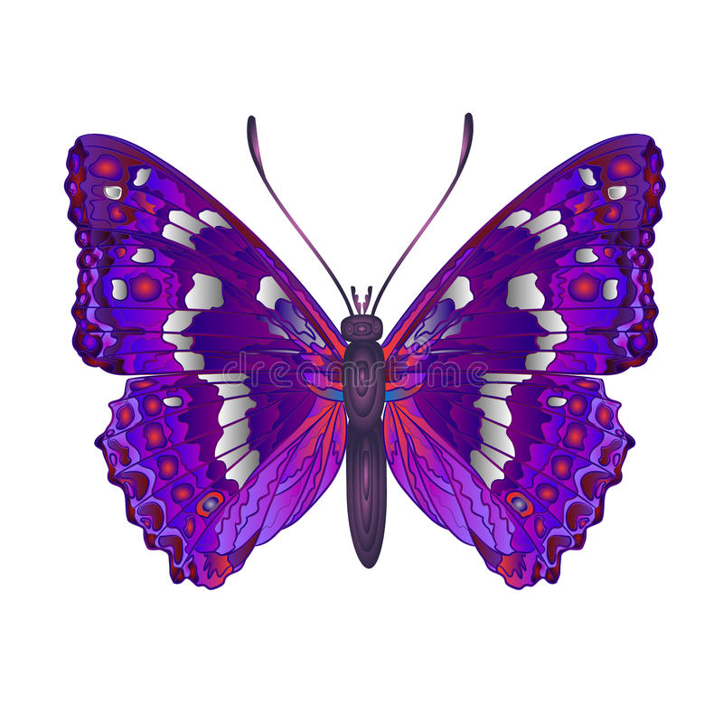 Διάνυσμα ίριδων Apatura πεταλούδων απεικόνιση αποθεμάτων