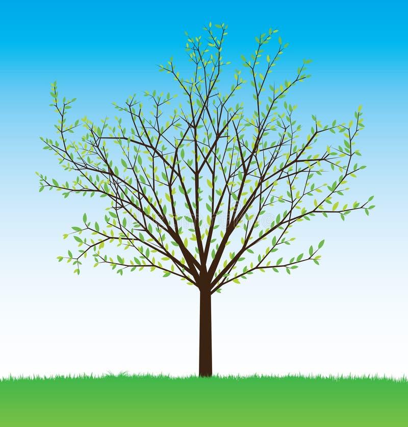 διάνυσμα θερινών δέντρων διανυσματική απεικόνιση