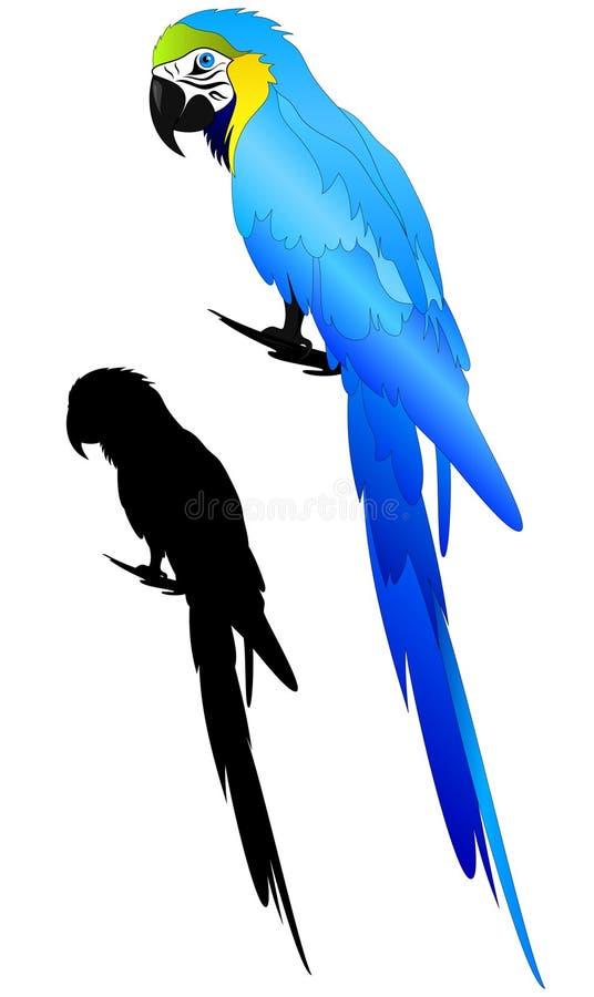 διάνυσμα παπαγάλων ελεύθερη απεικόνιση δικαιώματος