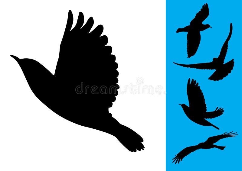 διάνυσμα πτήσης πουλιών ελεύθερη απεικόνιση δικαιώματος