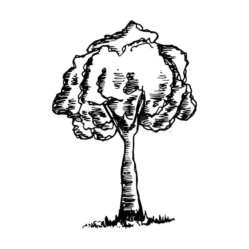 Διάνυσμα σκίτσων δέντρων η ανασκόπηση απομόνωσε το λευκό διανυσματική απεικόνιση