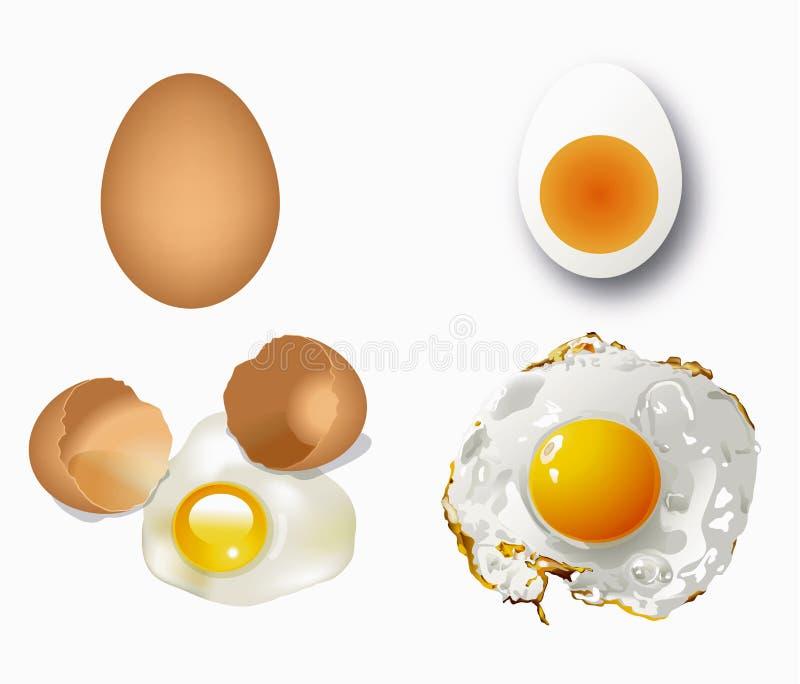 Διάνυσμα των αυγών ελεύθερη απεικόνιση δικαιώματος