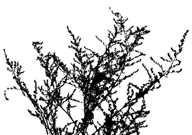 διάνυσμα φυτών χλόης διανυσματική απεικόνιση