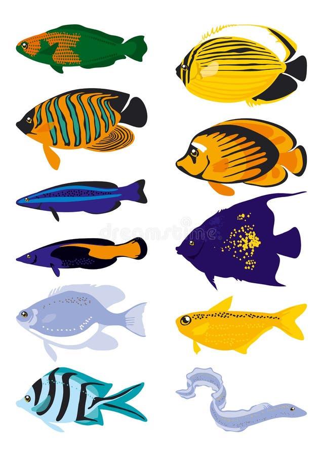 διάνυσμα ψαριών ελεύθερη απεικόνιση δικαιώματος