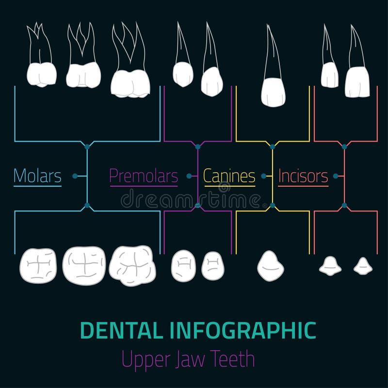 Διάνυσμα Infographic δοντιών απεικόνιση αποθεμάτων