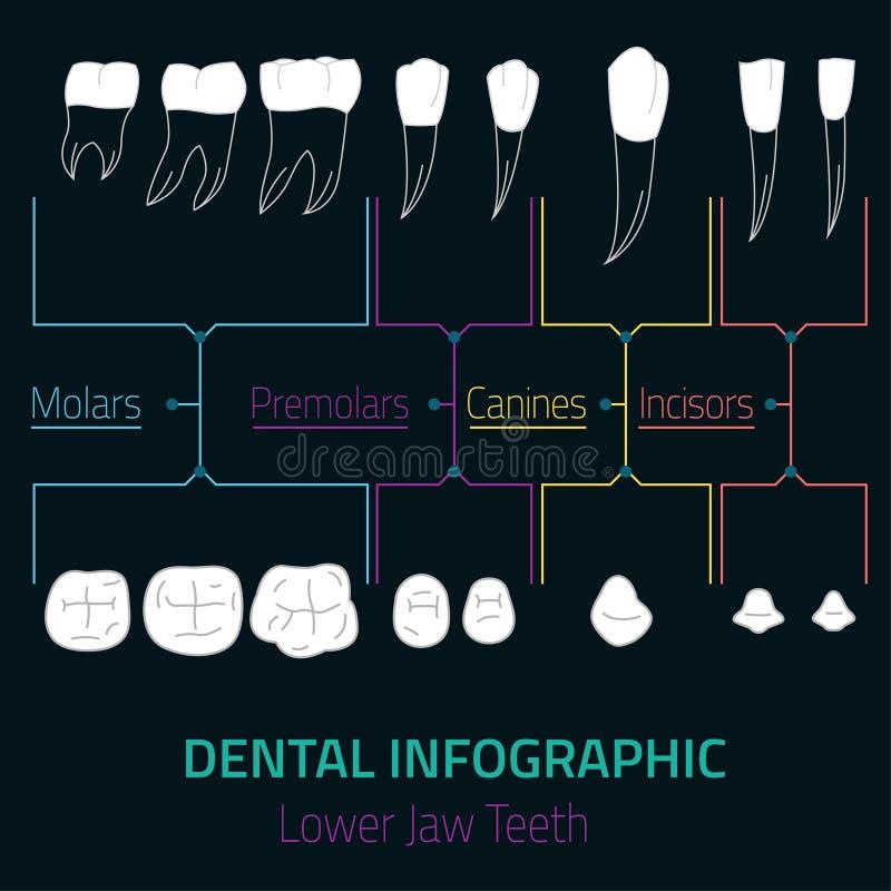 Διάνυσμα Infographic δοντιών ελεύθερη απεικόνιση δικαιώματος