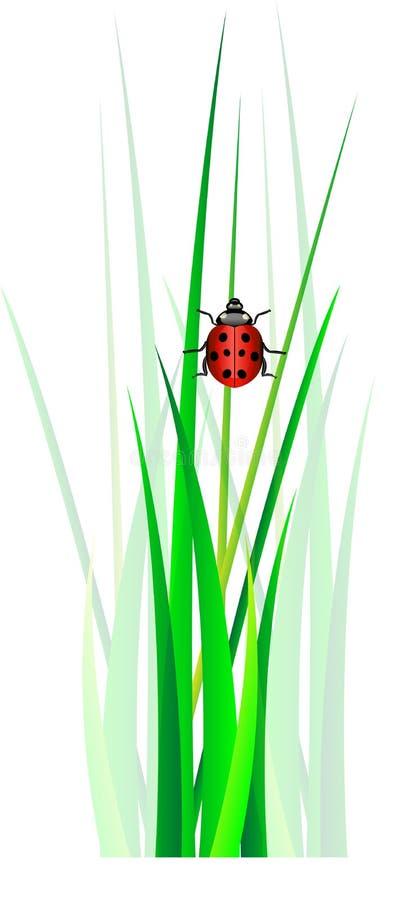 Διάνυσμα ladybug στην πράσινη χλόη απεικόνιση αποθεμάτων