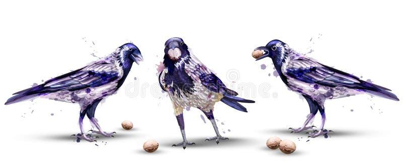 Διάνυσμα watercolor κοράκων Απομονωμένα πουλιά στα άσπρα υπόβαθρα ελεύθερη απεικόνιση δικαιώματος