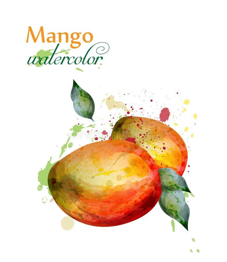 Διάνυσμα watercolor φρούτων μάγκο Εύγευστα ζωηρόχρωμα απομονωμένα σχέδια ελεύθερη απεικόνιση δικαιώματος