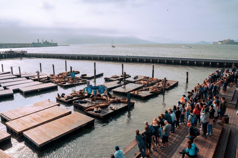 Διάσημη αποβάθρα 39 με τα λιοντάρια θάλασσας στο Σαν Φρανσίσκο, ΗΠΑ Άποψη νησιών Alcatraz στοκ φωτογραφία