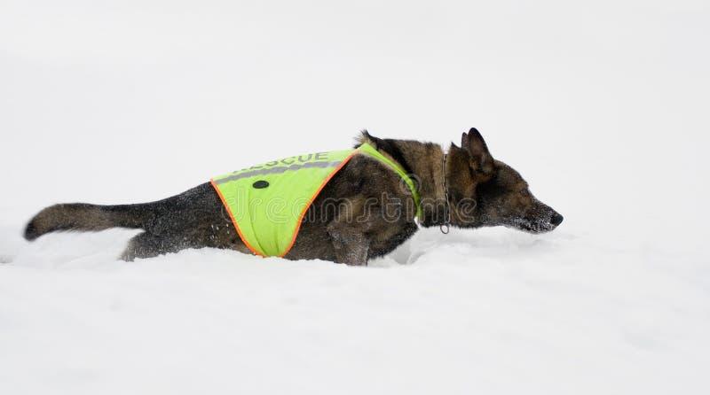 διάσωση σκυλιών στοκ εικόνα με δικαίωμα ελεύθερης χρήσης