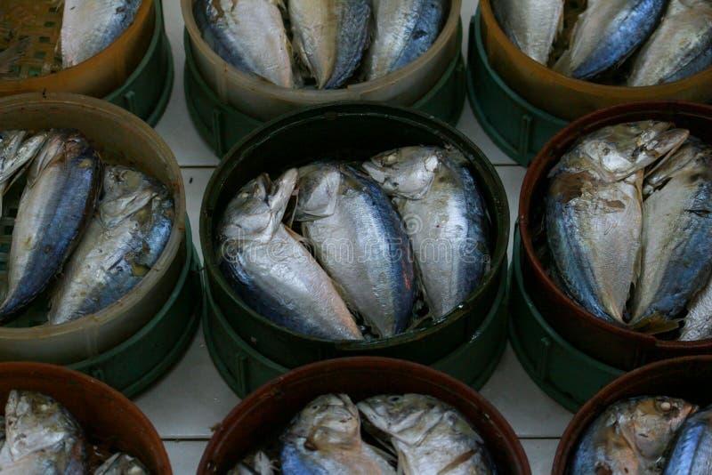 Διάταξη ψαριών σκουμπριών στοκ εικόνα
