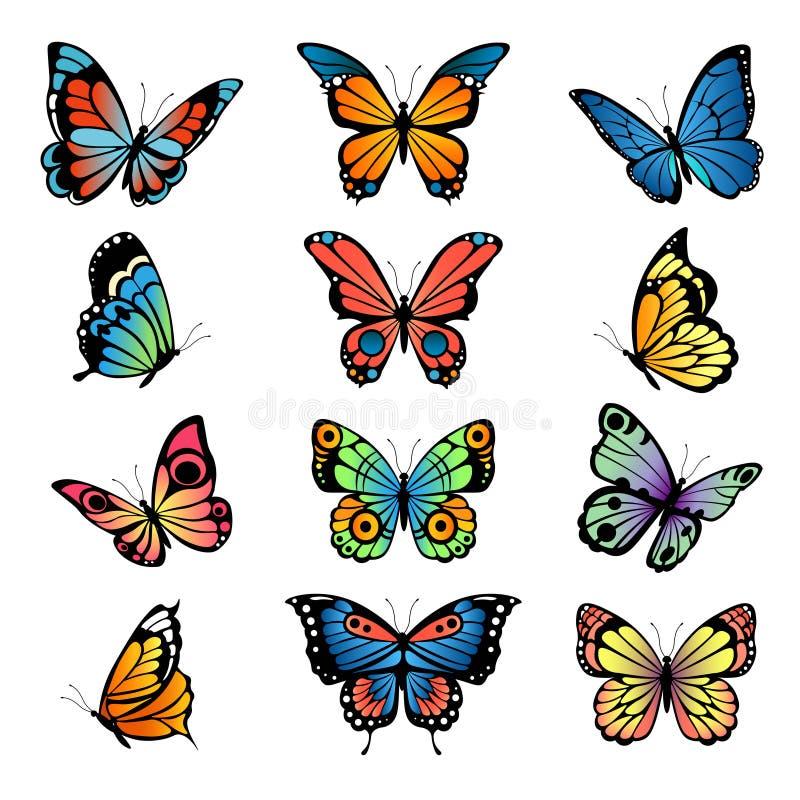 Διάφορες πεταλούδες κινούμενων σχεδίων Καθορισμένες διανυσματικές απεικονίσεις των πεταλούδων ελεύθερη απεικόνιση δικαιώματος