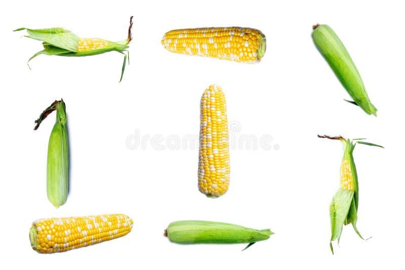 Διάφορες πλευρές του ακατέργαστου καλαμποκιού απομονωμένες σε λευκό φόντο Μοτίβο με καλαμπόκι στοκ φωτογραφία με δικαίωμα ελεύθερης χρήσης