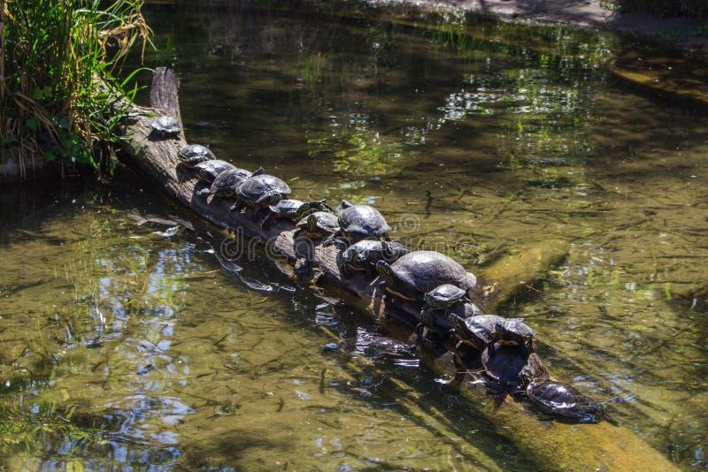 Διάφορες χελώνες στοκ εικόνες