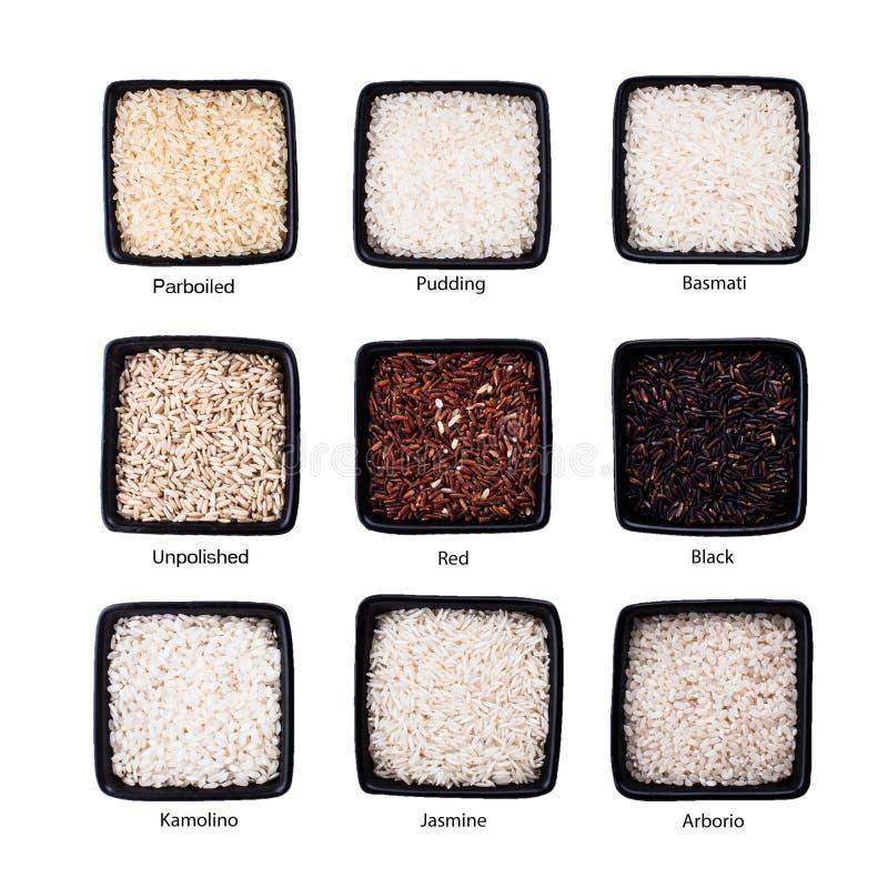 Διάφοροι τύποι ρυζιών στοκ εικόνες