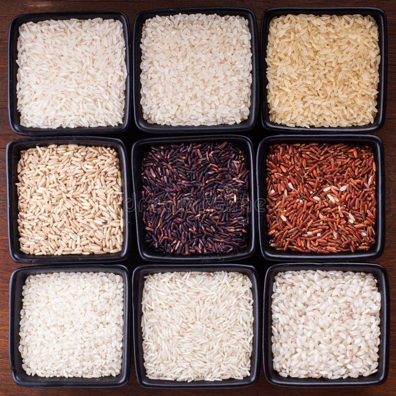 Διάφοροι τύποι ρυζιών στοκ εικόνες με δικαίωμα ελεύθερης χρήσης