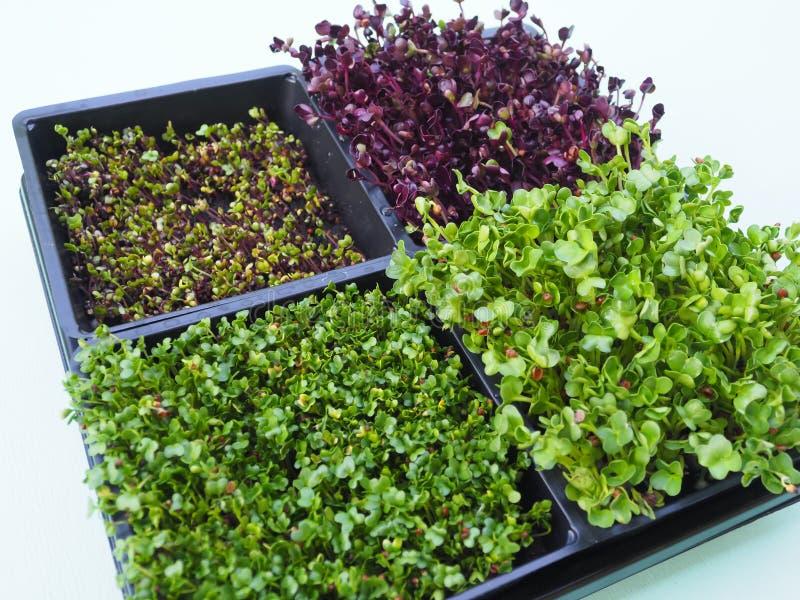 Διάφοροι τύποι υγιών λαχανικών μικροϋπολογιστής-πρασίνων στοκ εικόνες