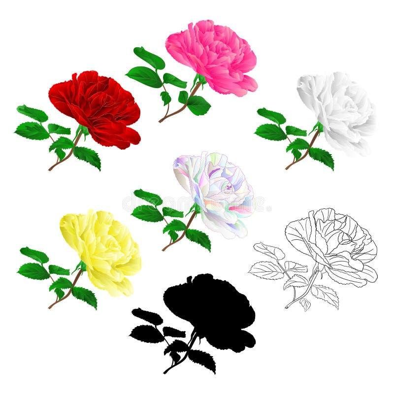 Διάφορος κόκκινος ρόδινος άσπρος κίτρινος αυξήθηκε μίσχος με τα φύλλα φυσικά και τρύγος περιλήψεων και σκιαγραφιών σε ένα άσπρο δ απεικόνιση αποθεμάτων