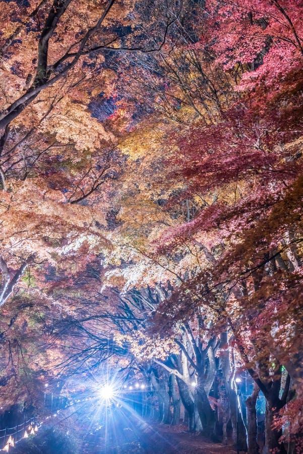 Διάδρομος σφενδάμνου ή σφένδαμνος tennel στοκ φωτογραφία