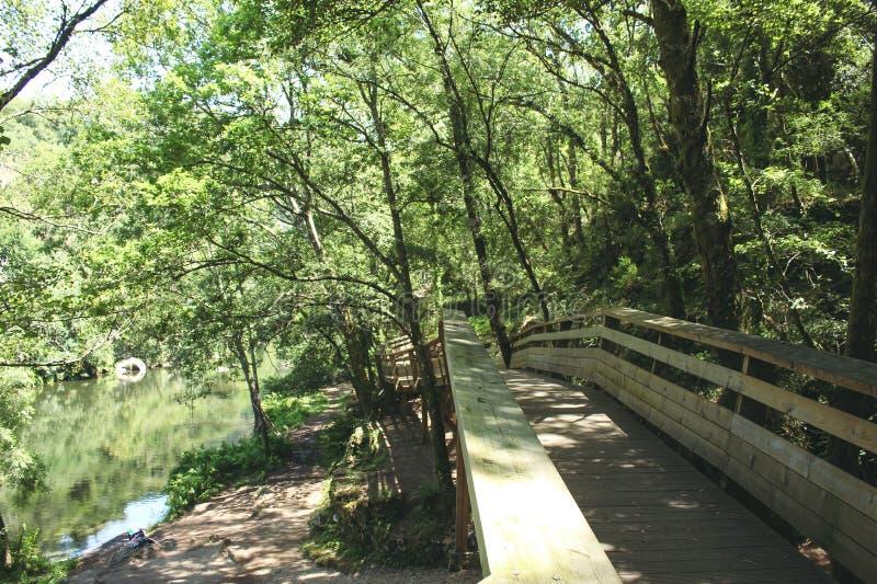 Διαβάσεις πεζών Paiva που βρίσκονται στις αριστερές όχθεις του ποταμού Paiva, στο δήμο Arouca, Αβέιρο, Πορτογαλία στοκ φωτογραφίες