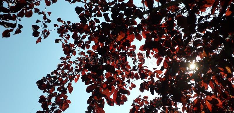 Διαβάστε τα φύλλα και τον ήλιο στοκ εικόνες