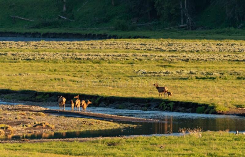Διαγώνιος ποταμός αλκών στην κοιλάδα του Lamar στοκ φωτογραφία με δικαίωμα ελεύθερης χρήσης
