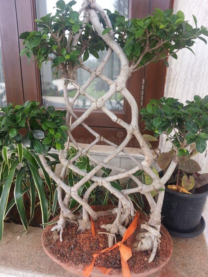 Διαγώνιο δέντρο στοκ εικόνα με δικαίωμα ελεύθερης χρήσης