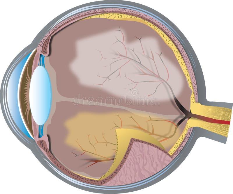 διαγώνιο τμήμα ματιών διανυσματική απεικόνιση