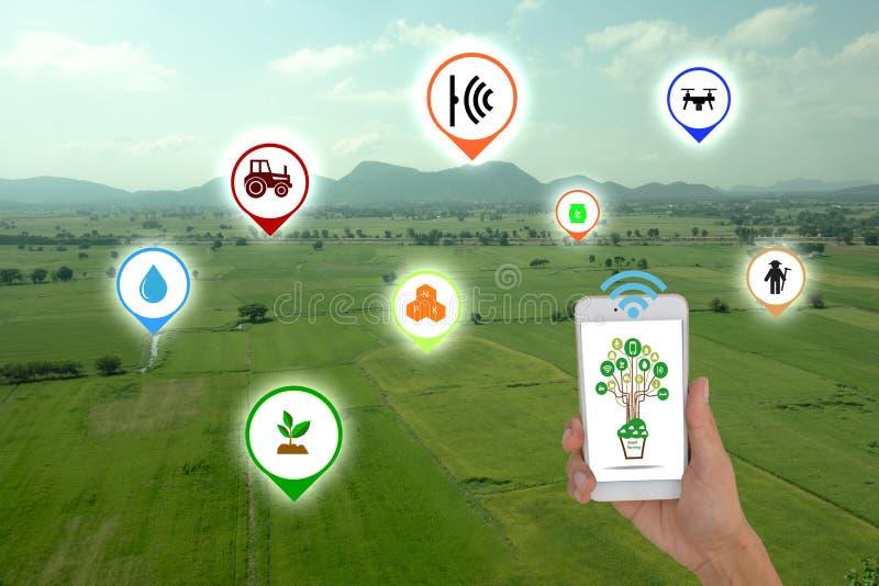 Διαδίκτυο της έννοιας thingsagriculture, έξυπνη καλλιέργεια, έξυπνη γεωργία Ο αγρότης που χρησιμοποιεί την εφαρμογή στο τηλέφωνο  στοκ φωτογραφία με δικαίωμα ελεύθερης χρήσης
