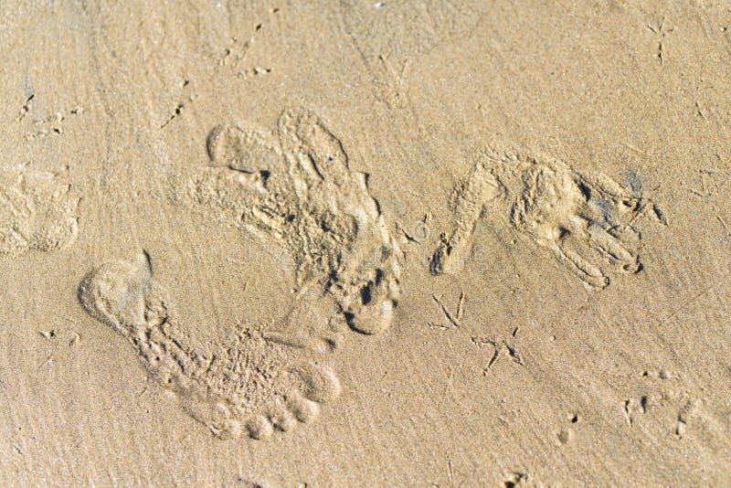 Διαδρομές και τυπωμένες ύλες στην ξηρά άμμο από τα ζώα και τους ανθρώπους στοκ φωτογραφία