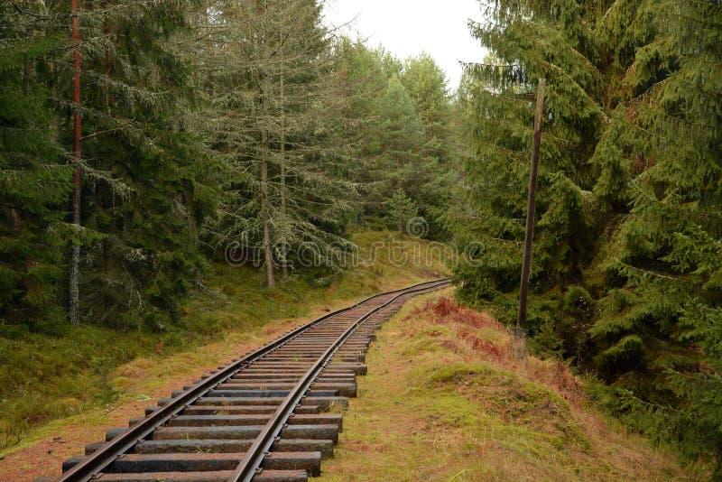 Διαδρομές στο πράσινο δάσος στοκ εικόνες με δικαίωμα ελεύθερης χρήσης