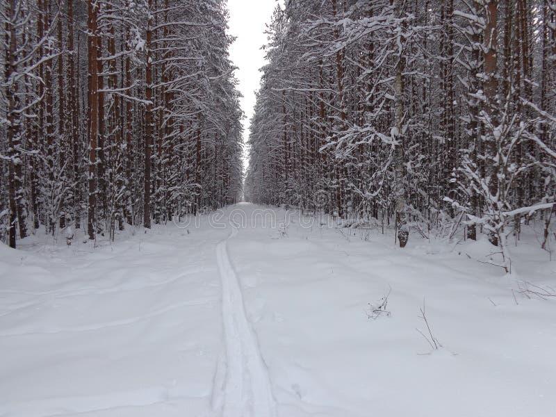 Διαδρομή σκι στο χειμερινό δάσος στοκ φωτογραφίες