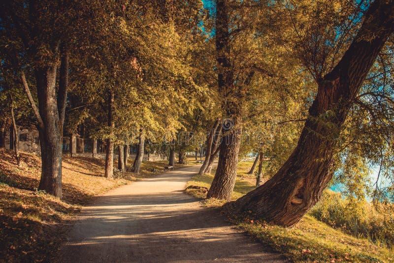 Διαδρομή στο πάρκο, σήραγγα δέντρου στοκ φωτογραφίες