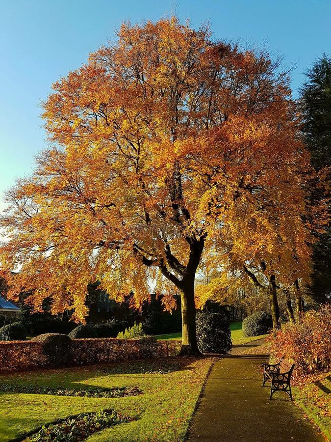 διαθέσιμο διάνυσμα δέντρων απεικόνισης φθινοπώρου στοκ φωτογραφίες