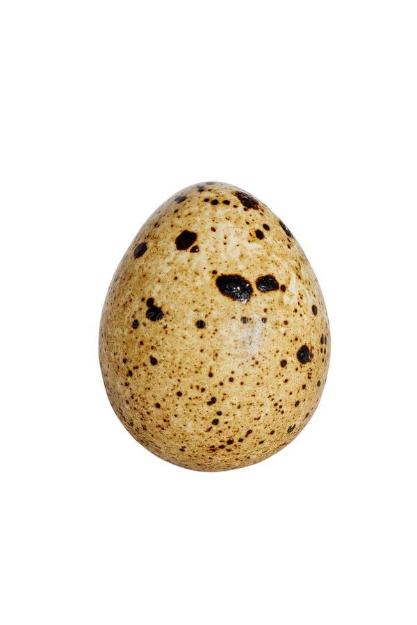 Διαιτητικό αυγό ορτυκιών στοκ φωτογραφία με δικαίωμα ελεύθερης χρήσης